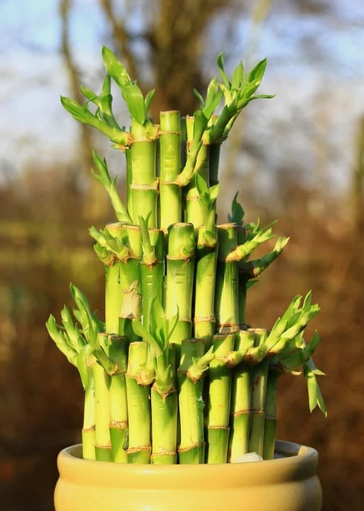 How To Care For A Bamboo Plant