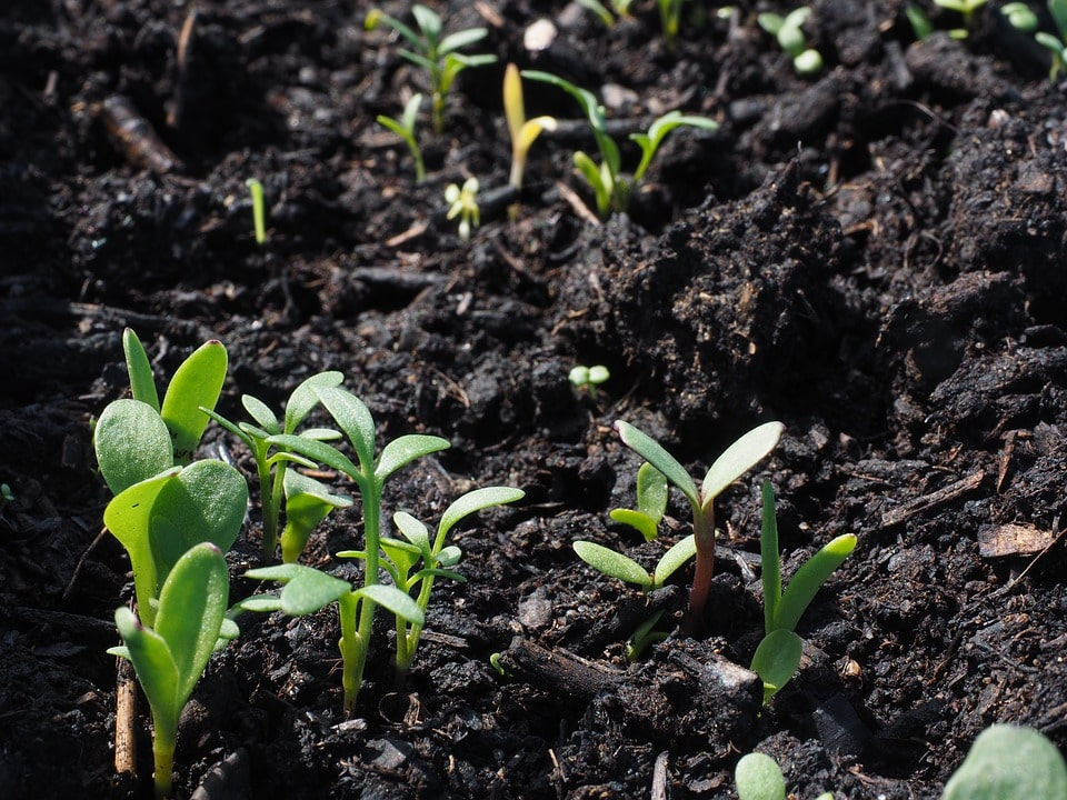 How To Sterilize Soil