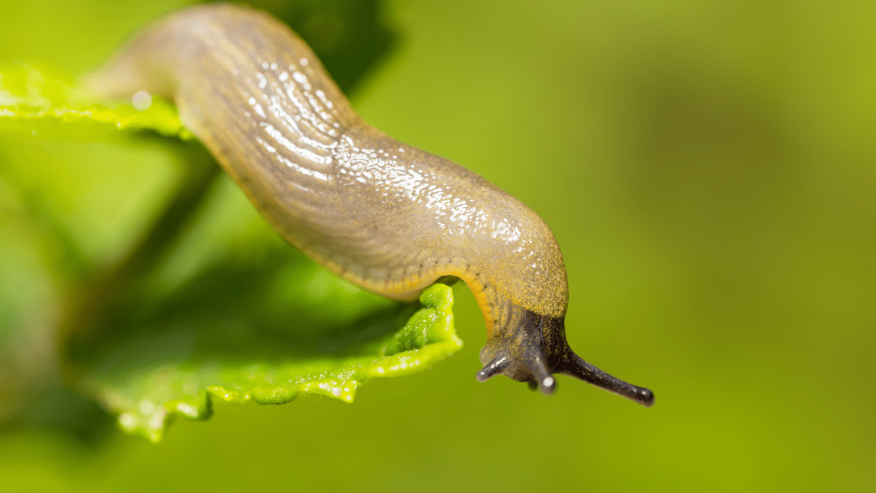 What Do Slugs Eat