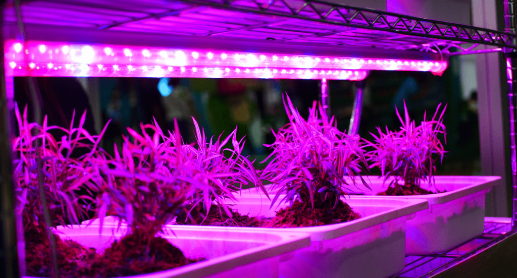 Artificial Light For Plants Vs Sunlight