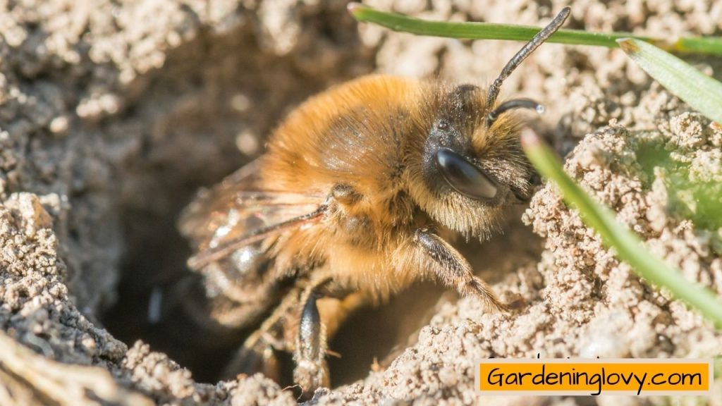 What Are The Places For Ground Bees To Live