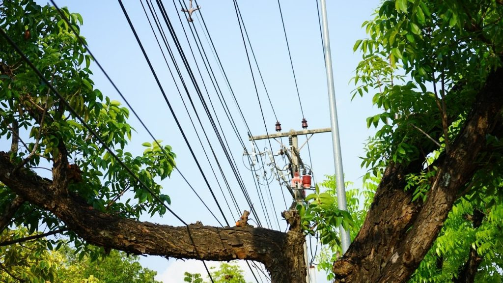 How To Remove Tree Branches On Power Line To House